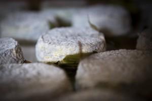 le-beurre-bordier-collection-les-familles-de-fromage-les-croutes-naturelles